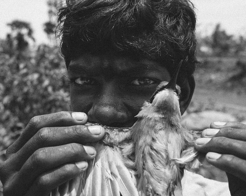 The Threatened Tribe Of The Irular